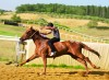Palio-approvato-il-protocollo-per-l-addestramento-dei-cavalli-2020