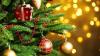 Bando-per-l-assegnazione-di-n.3-posteggi-temporanei-peer-la-vendita-di-alberi-di-Natale-nel-periodo-08-24-dicembre-2019